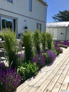 Denna lilla trädgård i San Francisco designades för underhållning Backyard House, Backyard Landscaping, Garden Design Ideas On A Budget, Garden Landscape Design, Diy Pergola, Dream Garden, Garden Inspiration, Outdoor Gardens, Decking