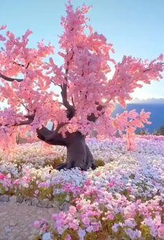 Beautiful Nature Wallpaper, Beautiful Landscapes, Beautiful Gardens, Beautiful Flowers, Beautiful Places, Simply Beautiful, Amazing Gardens, Aesthetic Painting, Aesthetic Drawing