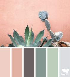 Cacti Color - http://design-seeds.com/home/entry/cacti-color9