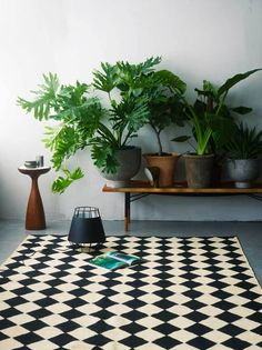 I love a row of plants on a bench :) Indoor plants and cactus. An assortment of different house plants and foliage. Green rooms and rooms with potted plants. Green Plants, Potted Plants, Indoor Plants, Tropical Plants, Indoor Gardening, Big Plants, Urban Gardening, Indoor Rugs, Indoor Outdoor