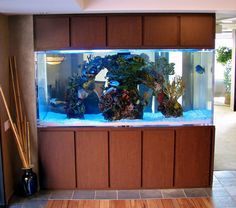 This is a 500 gallon custom aquarium. It's viewable from three sides and houses an artificial reef insert. The aquarium separates the lobby from the conference room. To view more of our portfolio work please visit www.aquatic-perfection.com