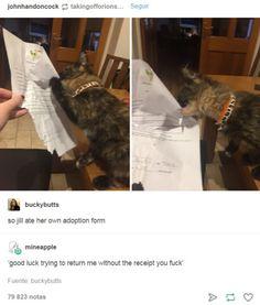best-of-tumblr-cat-ate-receipt