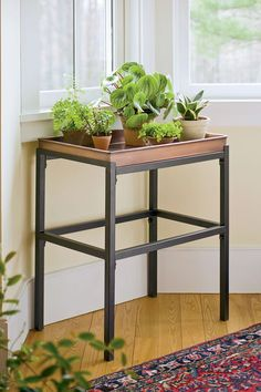 Cool Plant Stand Design Ideas for Indoor Houseplant 78 - Rockindeco Coffee Table Plants, Plant Table, Plant Trays, Plant Pots, Coffee Tables, Inside Plants, Cool Plants, Indoor Flowers, Indoor Plants