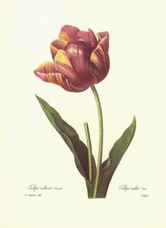1991 Vintage REDOUTE BOUQUET #26 PRIMROSE NARCISSUS Color Art Print Lithograph
