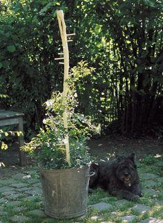 Un tuteur comme un treillis en bambou jardins arbres et - Tuteur plante grimpante ...