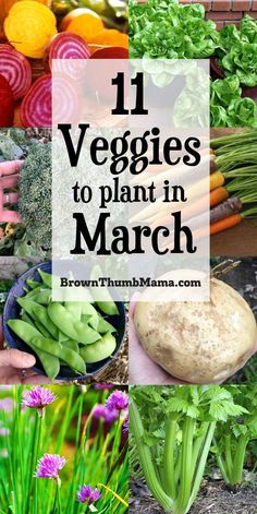 Family Garden Design Plant these 11 vegetables in March and you will have a great harvest this summer! Includes planting tips, recommended varieties, and recipes for your harvest. Backyard Plants, Backyard Vegetable Gardens, Container Gardening Vegetables, Veg Garden, Vegetable Garden Design, Planting Vegetables, Garden Pests, Planting A Garden, Easy To Grow Vegetables