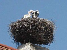 Rust Neusiedlersee Bald Eagle, Austria, Birds, Animals, Grey Goose, Types Of Animals, Travel, Animales, Animaux