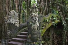 The tropical forests of Ubud