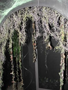 haunt entrance - This is how I want my arbor to look as people walk in the the party area.