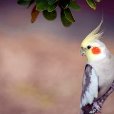 'Sexy Pink - heliconia flower' by Jenny Dean Cute Birds, Pretty Birds, Beautiful Birds, Cockatiel Care, Animals And Pets, Cute Animals, Budgies, Parrots, Cute Sloth