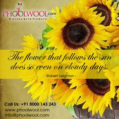 The flower that follows the sun does so even on cloudy days. Follow @phoolwool for more updates.
