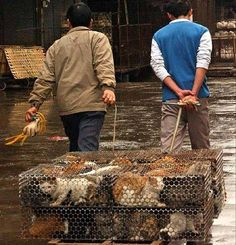 Cats for food...Am I the only one who thinks China is a seriously f**ked up country?