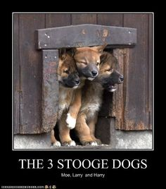 THE 3 STOOGE DOGS