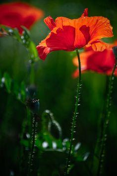 Red Summer by adrianbilescu.deviantart.com on @DeviantArt