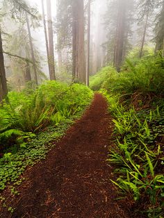 ✯ Prairie Creek State Park just south of the California / Oregon Border