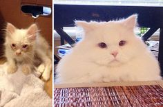 This Scrawny Rescue Kitten Has Now Ballooned Into An Epic Fluffball  - CountryLiving.com