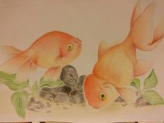 Goldfish !colored pencil drawing