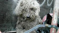 It's a year old story but I've just seen it & had to share it. This blind stray pup, later named Fiona, was rescued from a trash heap. Watch the inspiring video of her transformation to joy & even sight.