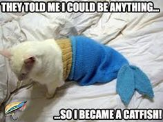 1000+ images about Fly Fishing Memes on Pinterest | Fly ...