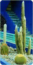 Cactus en INFOJARDIN