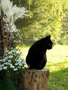 10 2013 (1797)k | Shnufel & Feline Friends | Flickr