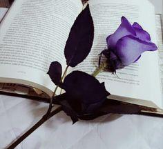 Rosas de todas as cores... Amo todos elas..... Perfumadas...... Pétalas de sonhos... The Kiss of Deception Darkside Books