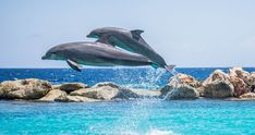 Don't Force Dolphins Into Captivity