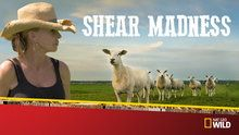 Shear Madness - Episodes