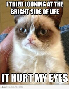 Funny pictures about Meet Grumpy Cat. Oh, and cool pics about Meet Grumpy Cat. Also, Meet Grumpy Cat. Grumpy Cat Quotes, Meme Grumpy Cat, Cat Memes, Grumpy Kitty, Funny Cats, Funny Animals, Funniest Animals, Tierischer Humor, Intj Humor