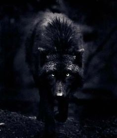 Black Wolves | Black Wolf Silver Eyes Graphics, Pictures, & Images for Myspace ...