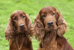 Hunting for a great dog name for your loyal hunting companion? Here is a list of 100 hunting dog names, broken down by male and female!