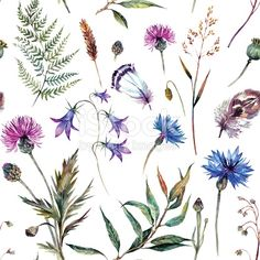 Hand drawn watercolor summer wildflowers pattern including cornflower, thistle, willow branch, bell and feathers isolated on white background. Realistic botanical illustration in trendy vintage style. Watercolor Trees, Floral Watercolor, Art Floral, Scottish Thistle Tattoo, Scottish Flowers, Wildflower Drawing, Willow Tree Tattoos, Thistle Flower, Willow Branches
