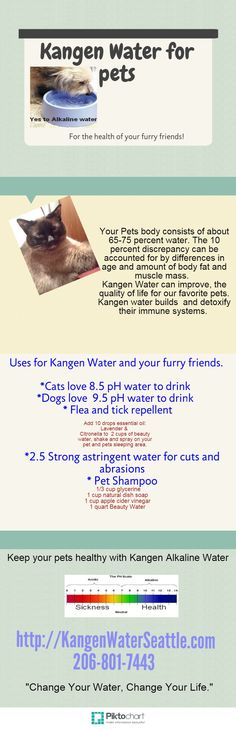 Kangen Water for pets Copy Copy | @Piktochart Infographic