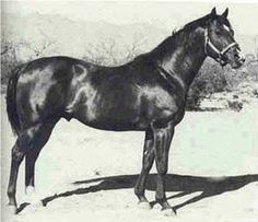Three Bars(1940)(Colt)Percentage- Myrtle Dee By Luke McLuke. 4x4 To Sandfly, 5(C)x5(F)x5(F) To Domino. 28 Starts 12 Wins 3 Seconds 1 Third. $20,840. Won Speed H. The Leading Sire Of Racing And Siring And/Or Producing Quarter Horses For Many Years.