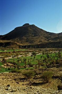 Green valley in the middle of the desert, Morocco