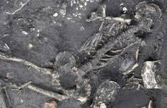 Child skeleton sheds new light on 1,500-year-old crime mystery in Sweden | Ancient Origins