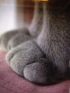 A cat's paws may be the cutest part of the cat.