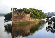 """""""Ayrfield & 'Mortlake Bank' wrecks in Homebush Bay   The 'Mortlake Bank', in the background, was a ' 60 miler' collier taking coal from Newcastle, NSW to the Australian GasLight Company works at Mortlake, NSW. The ship of 1375 tons, was built by Swan Hunter at Wallsend, England in 1924 and scrapped in Oct 1972.  In the foreground is the SS 'Ayrfield' 1911, formerly SS 'Corrimal', another '60 miler' on the same gasworks run, scrapped in 1972..The ship now supports a magnificent mangrove…"""