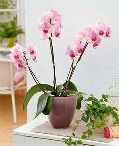 Орхидея в домашних условиях Garden Care, Vegetable Garden, Vegetables, Flowers, Plants, Veg Garden, Garden Maintenance, Home Vegetable Garden, Floral