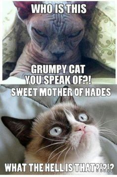 Hahahahahahahaha!!!!