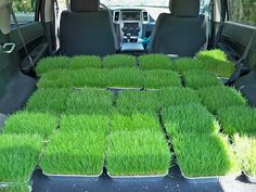 grass squares for table center peices. Would look cute with baseball and mini bat on it. Maybe photo of birthday child