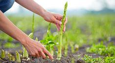 20 folyamatosan szüretelhető növény az ingyenes élelmiszerellátásért!