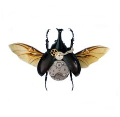 """Real Steampunk Beetle Insect Taxidermy Art- Butterflies, Butterfly Art, Insect Art, Entomology, Taxidermist, Interior Design, Bugs, Vintage. A 5""""x5"""" black wood shadow box frame secures a a real beetle insect inside with vintage watch parts. Very unique! All insects come from preservation farms and lived a full life. They were not harmed in any way for our artwork. Information cards will be included to learn more. Makes a great conversational piece! Real butterfly wings are used after…"""