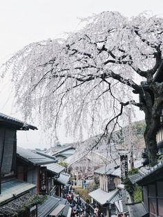 Each time here is different. | Kyoto