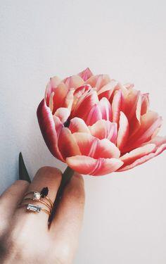 Fresh tulips + ring combos. Wearing @bingbangnyc Monroe Duet Ring & Tiny Marquis Ring.