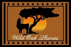 Our mission at Wild Oak Llamas is to breed exceptional llamas. To accomplish our goals, Wild Oak Llamas Home
