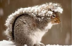 Squirrel Picture – Animal Wallpaper - National Geographic Photo of the Day Squirrel Pictures, Animal Pictures, Snow Pictures, Funny Pictures, Wildlife Photography, Animal Photography, National Geographic, Beautiful Creatures, Animals Beautiful