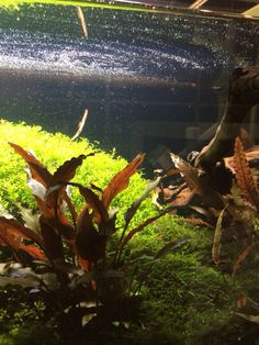 Planted tank With Sicce circulation pump MICRA