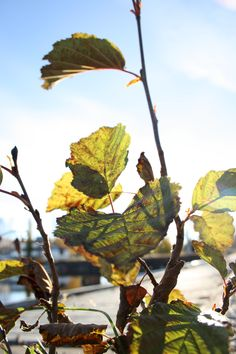 Morning leaves #photography #art #outside #nature #pretty
