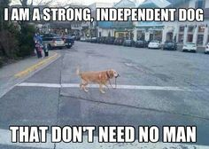 Strong independent dog